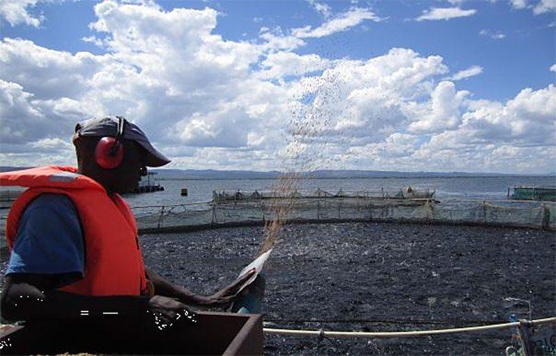 Aquaculture Lake Harvest