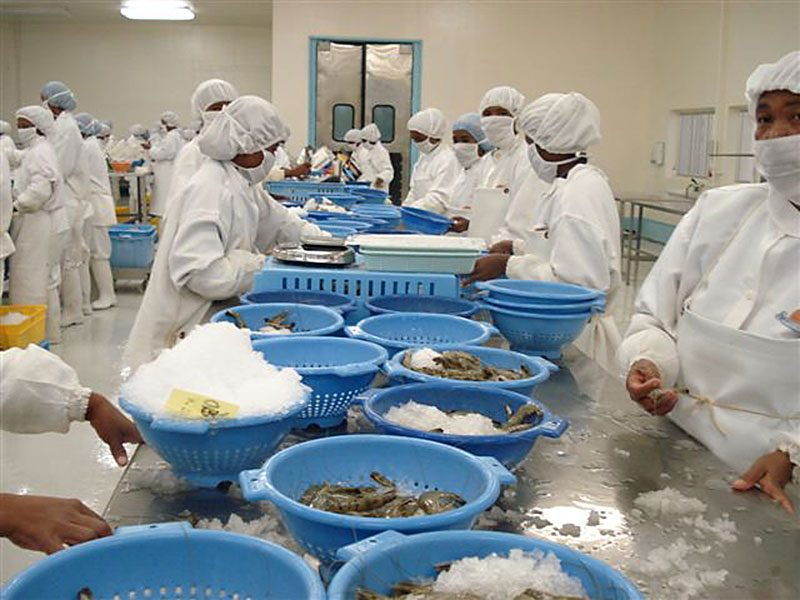 Fish-Processing-and-Marketing-1