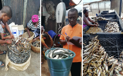 Data collecting and fish preparation