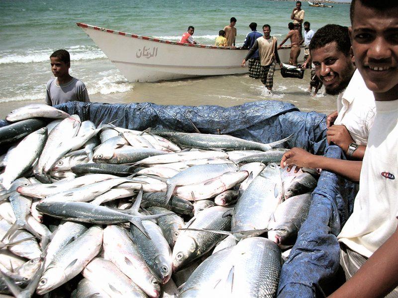 Fisheries Development & Management