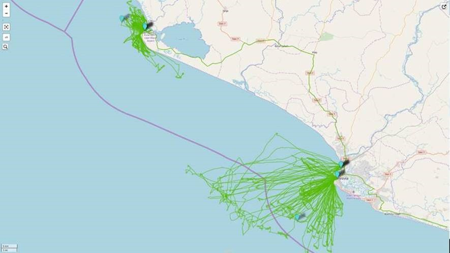 Recorded tracks to date by Pelagic Data Systems units in relation to the 12 nautical mile limit (shown in purple).
