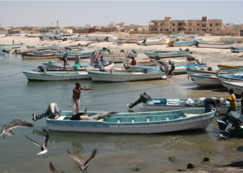 The traditional artisanal fishing vessels that dominate the Omani fleet