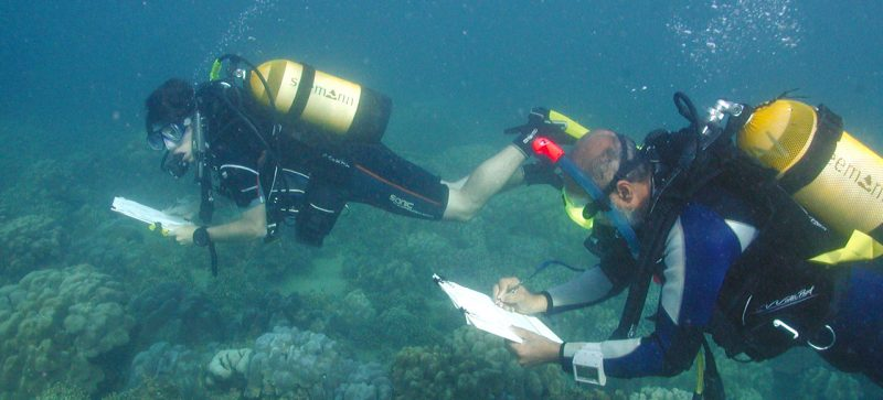 Fisheries & Benthic Surveys